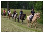 paardrijden3wrek